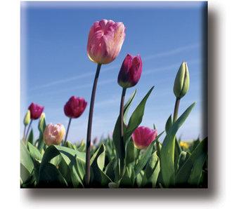Imán de nevera, campo con tulipanes, foto