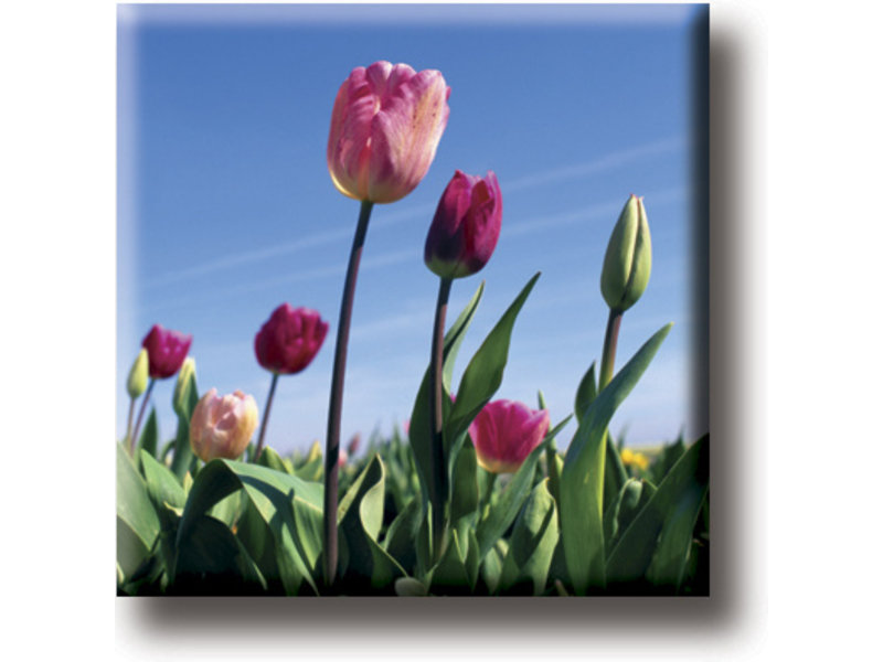 Fridge magnet, Field with tulips, photo