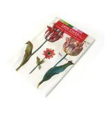 Brillendoekje, 10 x 15 cm, Twee tulpen met insecten, Marrel