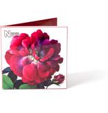 Card Wallet, Notecards Flowers