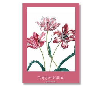 Poster, 50x70, Merian, Drie Tulpen
