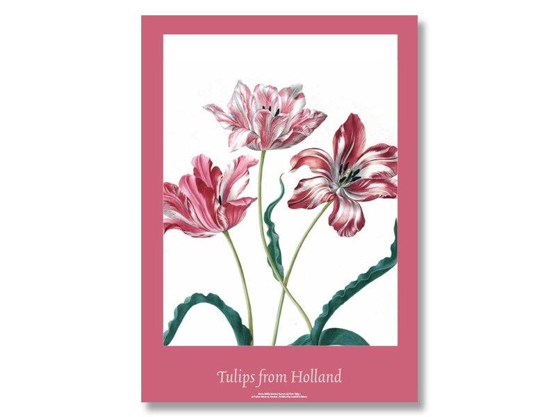 Affiche, 50x70, Merian, Trois tulipes
