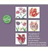 Card Wallet, SQ, Tulip Splendour