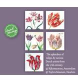 Carpeta de tarjetas, Tulipanes Splendour