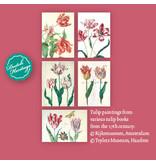 Kaartenmapje, Groot, Historisch tulpen