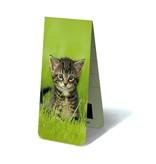 Magnetic Bookmark, Kitten in grass