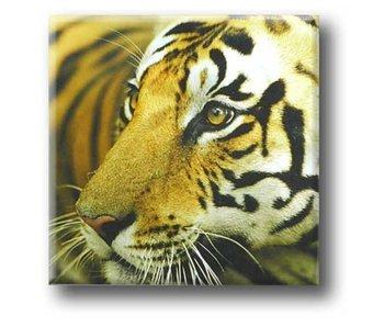Imán de nevera, tigre