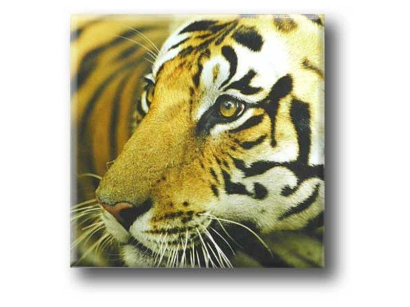 Kühlschrankmagnet, Tiger
