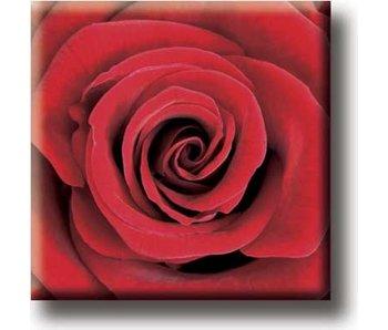 Imán de nevera, rosa roja