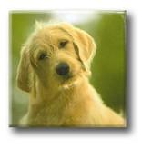 Fridge Magnet, Dog