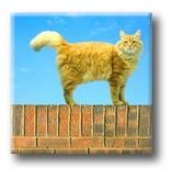 Kühlschrankmagnet, Katze an der Wand