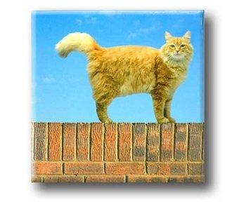 Aimant de réfrigérateur, chat sur le mur