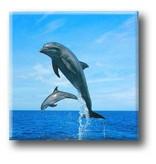 Fridge Magnet, Dolphins