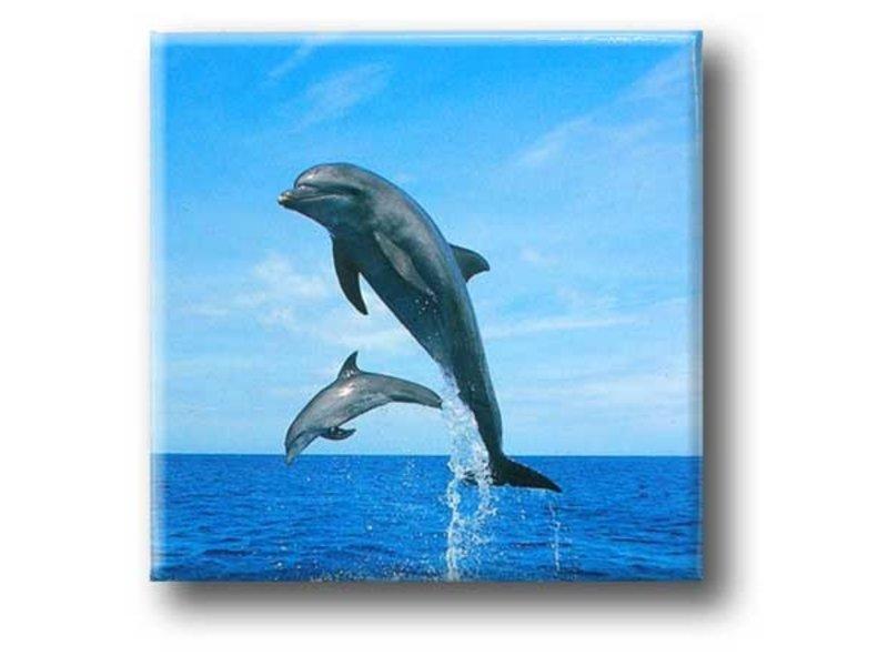Imán De Nevera, Delfines