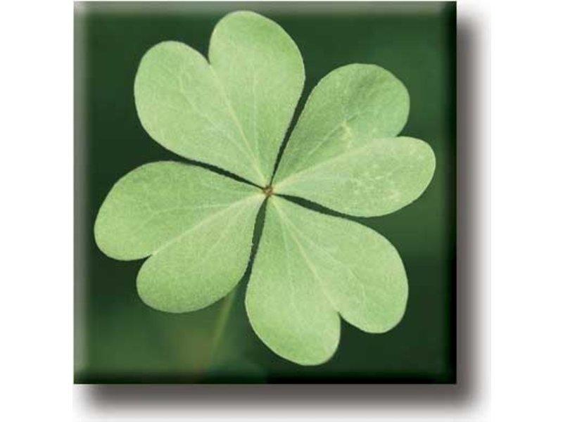 Fridge Magnet, Four Leaf Clover