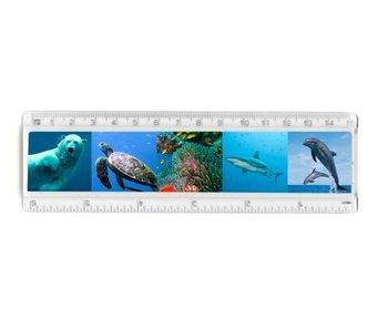 Lineal, Meeresleben, Tiere