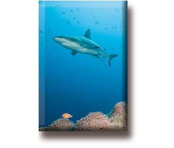 Imán de nevera, tiburón