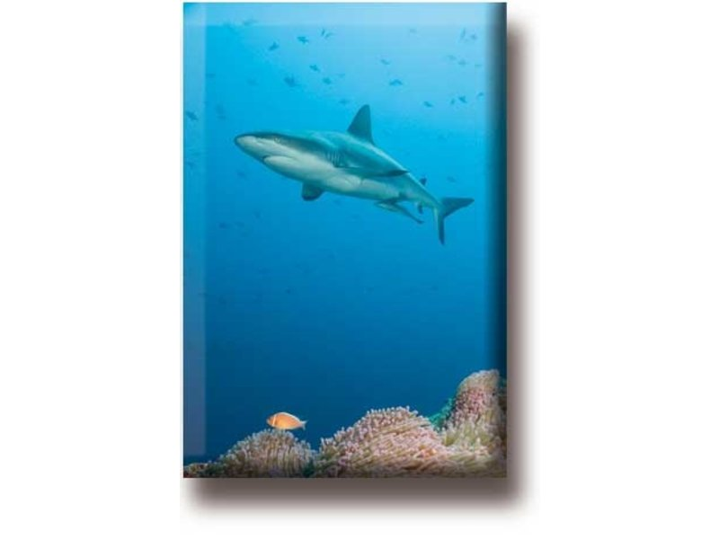 Kühlschrankmagnet, Hai