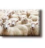 Aimant de réfrigérateur, troupeau de moutons