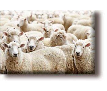 Imán de nevera, rebaño de ovejas
