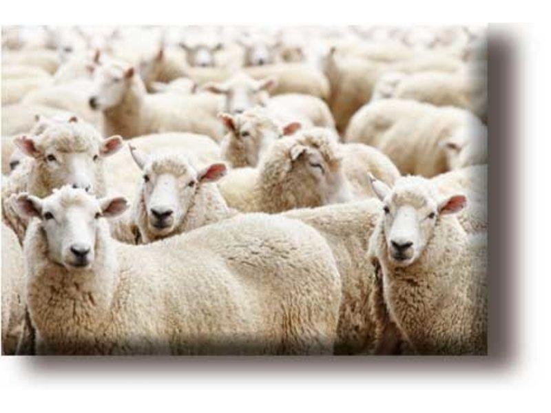 Fridge magnet, flock of sheep