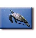 Koelkastmagneet, Schildpad