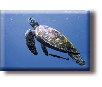 Kühlschrankmagnet, Schildkröte
