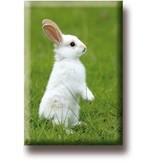 Aimant frigo, Petit lapin blanc