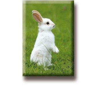 Kühlschrankmagnet, kleines weißes Kaninchen
