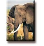 Aimant de réfrigérateur, éléphant