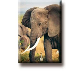 Fridge Magnet, Elephant