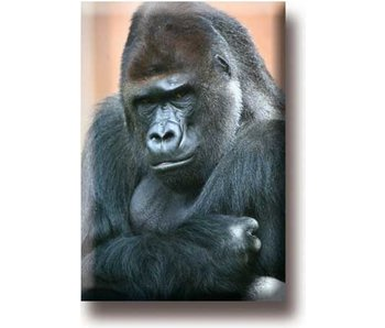 Fridge magnet, Gorilla