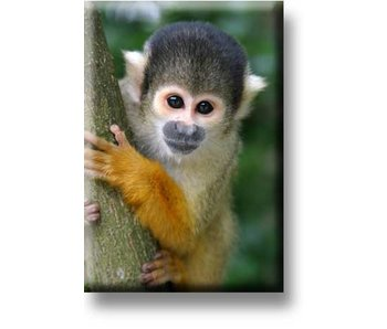 Fridge Magnet, Squirrel Monkey
