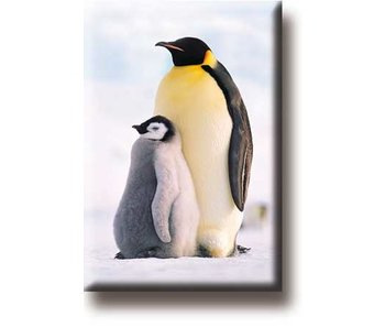 Imán de nevera, pingüinos