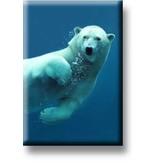 Kühlschrankmagnet, Eisbär