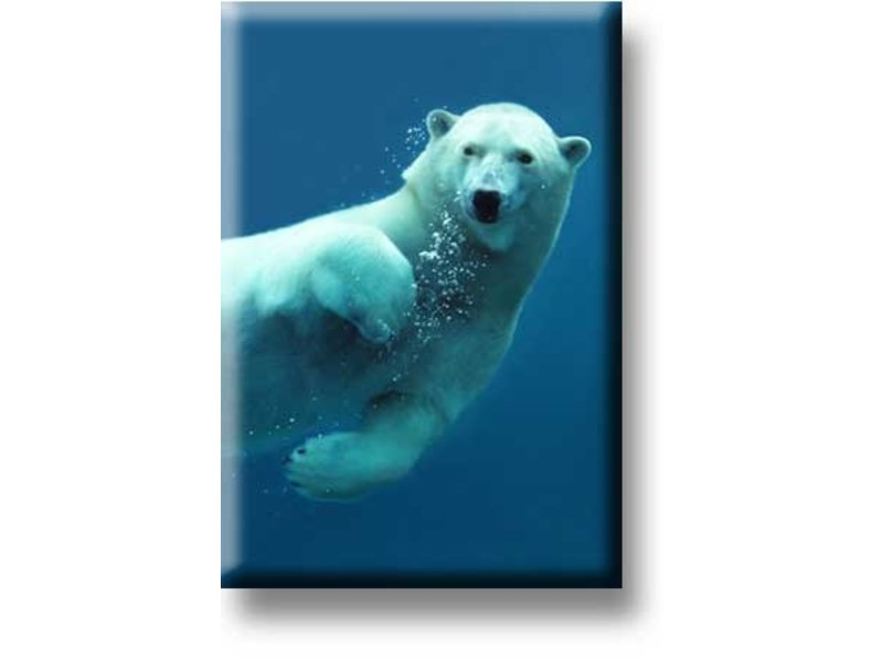 Fridge magnet, Polar bear