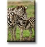 Koelkastmagneet, Zebra