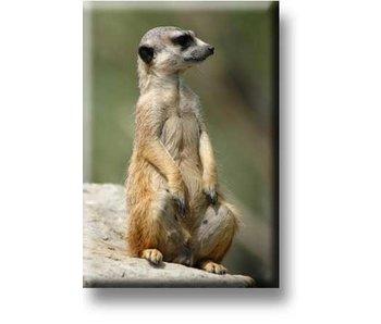 Aimant de réfrigérateur, Meerkat