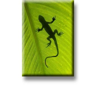 Fridge Magnet, Lizard