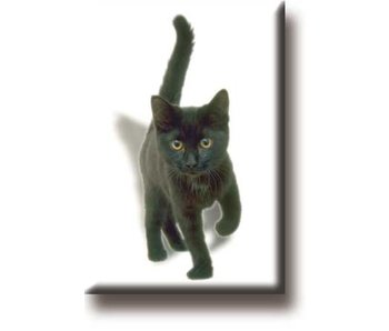 Imán de nevera, Gatito, gato, negro