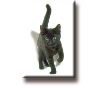 Koelkastmagneet, Kitten, poes, zwart
