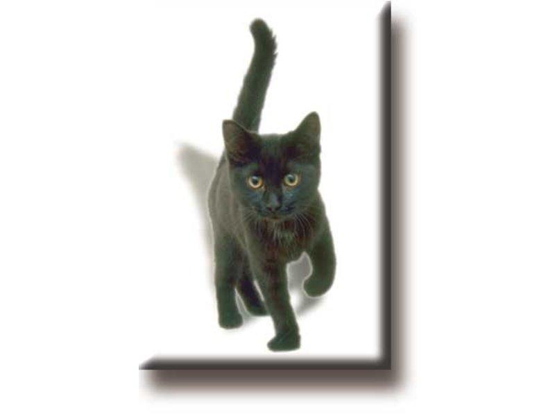 Fridge magnet, Kitten, cat, black