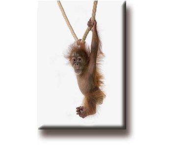 Aimant pour réfrigérateur, Bébé orang-outan