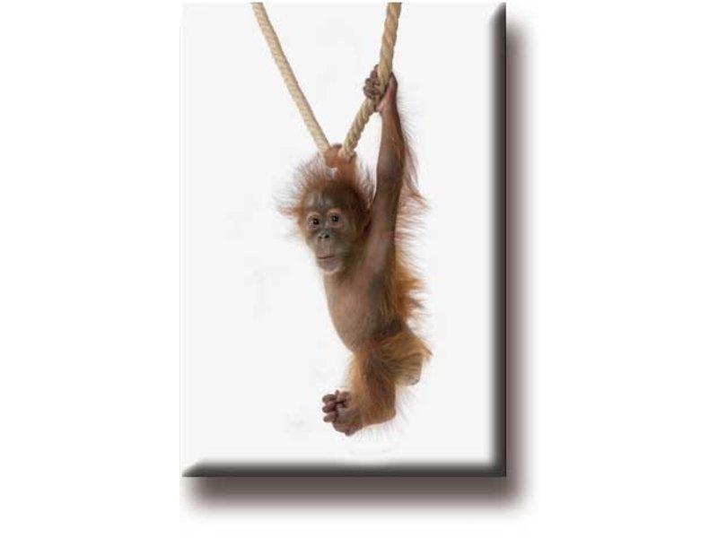 Imán de nevera, Orangután Bebé