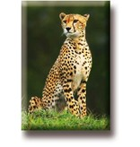 Fridge magnet, Cheetah