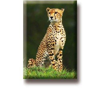 Koelkastmagneet, Cheetah