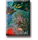 Kühlschrankmagnet, Clownfisch, tropisches Meer