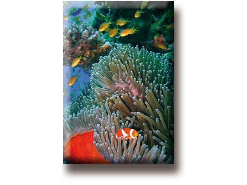 Aimant de réfrigérateur, poisson clown, mer tropicale