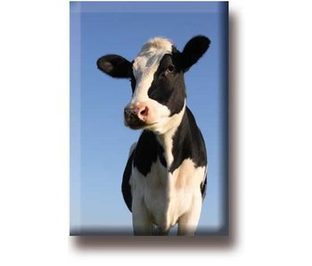 Fridge magnet, Cow, looks into the camera