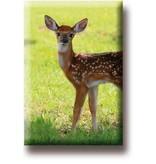 Fridge magnet, Deer, calf
